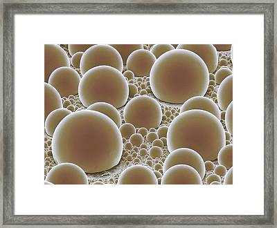 Tin Spheres On Carbon Substrate. Sem Framed Print