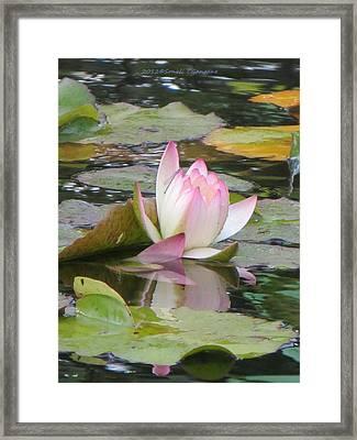 Tinge Of Pink Framed Print