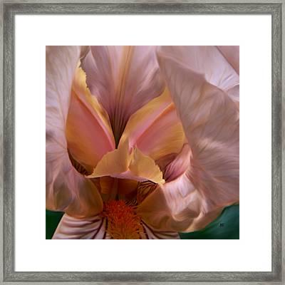 Tinkerbell Iris Framed Print by Barbara St Jean