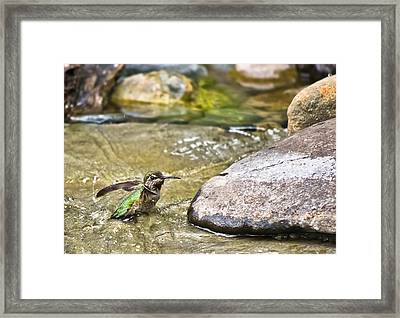 Tiny Bather Framed Print