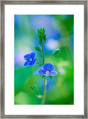 Tiny Bloom Framed Print