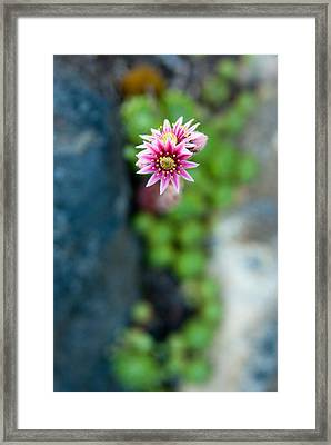 Framed Print featuring the photograph Tiny Blossom by Erin Kohlenberg