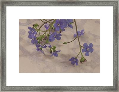 Framed Print featuring the photograph Tiny Blue by Sandra Foster