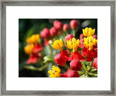 Tiny Buds Framed Print