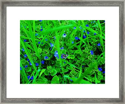 Framed Print featuring the photograph Tiny Butterfly by Sherman Perry
