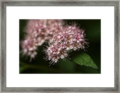 Tiny Flowers Framed Print