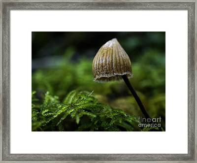 Tiny Framed Print by Inge Riis McDonald