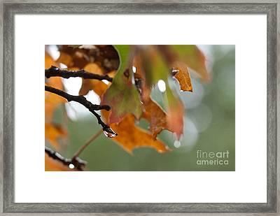 Tiny Leaf Framed Print by Barbara Shallue
