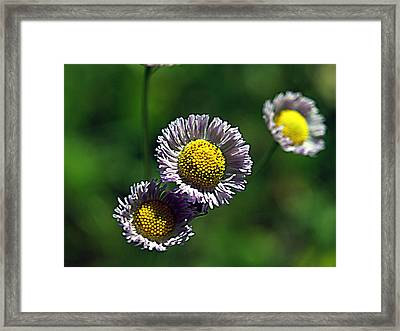 Tiny Little Weed Framed Print
