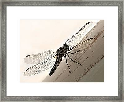 Tiny Magnificence  Framed Print by Micki Findlay