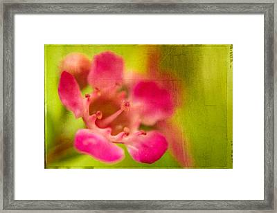 Tiny Pink Framed Print