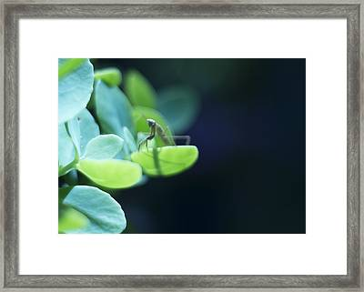 Framed Print featuring the photograph Tiny Praying Mantis On Sedum by Rebecca Sherman