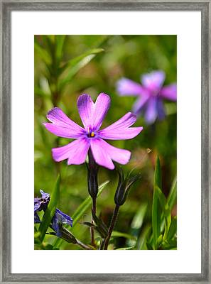 Tiny Purple Flower #1 Framed Print