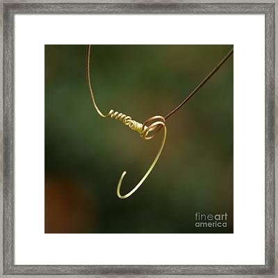 Tiny Spiral Curl Framed Print by Sabrina L Ryan