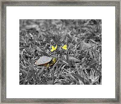 Tiny Turtle Selective Color Framed Print