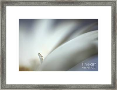 Tiny Water Drops Framed Print by Eden Baed