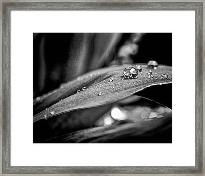 Framed Print featuring the photograph Tiny Worlds 3 by Brian Carson