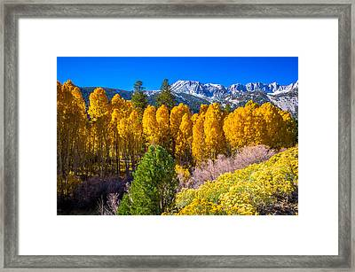 Tioga Pass Framed Print by Scott McGuire