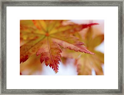 Tip Framed Print by Caitlyn  Grasso