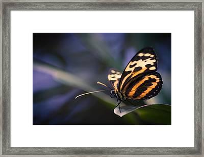 Tip Toe Tiger Framed Print