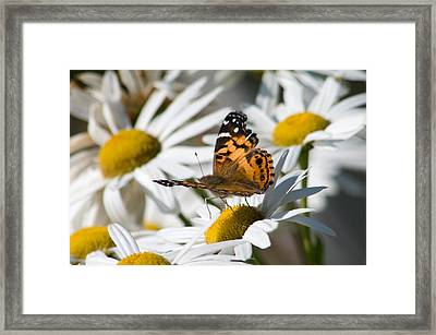Framed Print featuring the photograph Tip-toeing On Daisies by Greg Graham