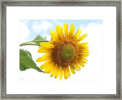 Tipping Over Framed Print by Kerri Mortenson