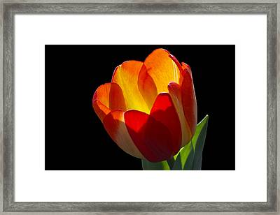 Tippy Framed Print