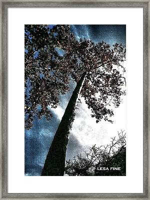 Framed Print featuring the photograph Tippy Top Tree II Art by Lesa Fine
