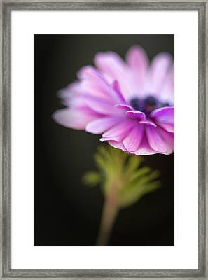 Tips Framed Print by Caitlyn  Grasso