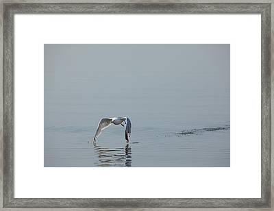 Tips Touching Framed Print by Karol Livote