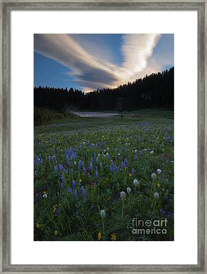 Tipsoo Sunrise Framed Print