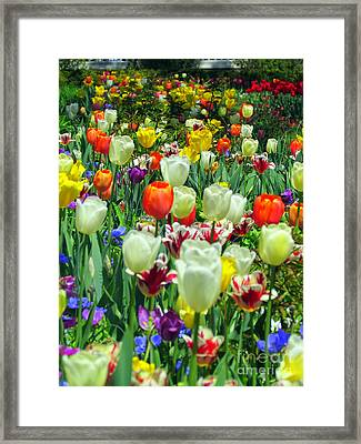 Tiptoe Through The Tulips Framed Print