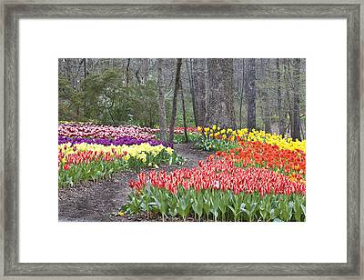 Framed Print featuring the photograph Tiptoe Thru The Tulips by Robert Camp