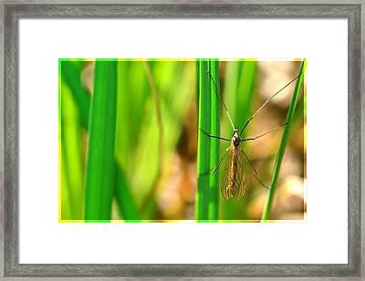 Tipula Framed Print by Tommytechno Sweden