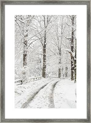 Into The Snowy Woods Framed Print