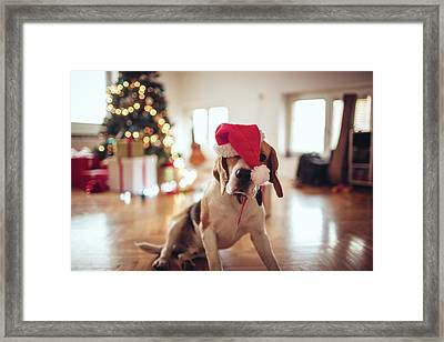 Tired Of Decorating For New Years Eve Framed Print by Aleksandarnakic