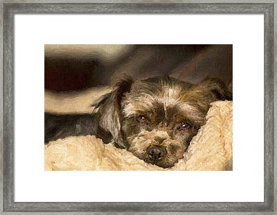 Tired Puppy Framed Print