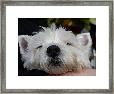 Tired Puppy Framed Print by Geraldine Alexander