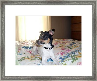 Framed Print featuring the photograph 'tis Herself by Barbara McDevitt