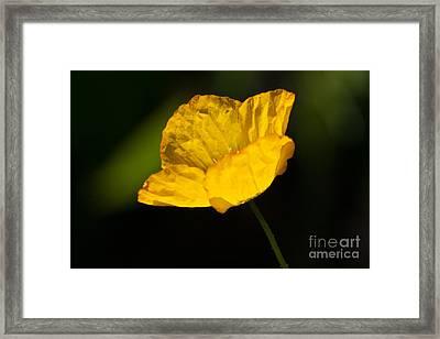 Tissue Paper Petals Framed Print by Jennifer Apffel