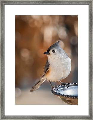 Titmouse Framed Print by James Barber