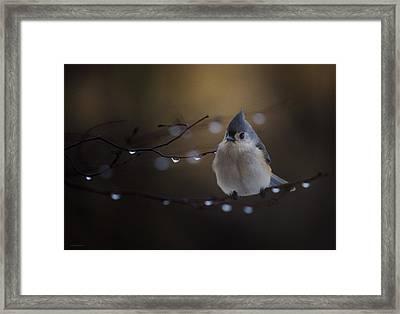 Titmouse Framed Print by Ron Jones