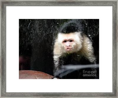 Tito In Window Framed Print by Ed Weidman