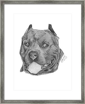 Titus - 024 Framed Print by Abbey Noelle