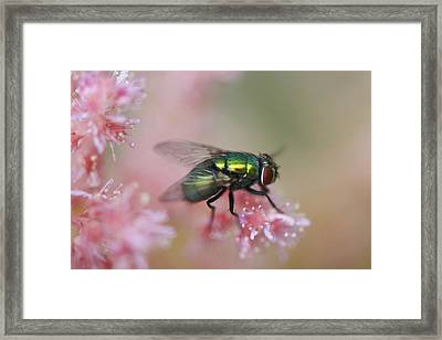 To Be A Fly On A Wall Framed Print by Julie Smith