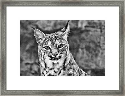 To Be Seen Framed Print by Natasha Mohr
