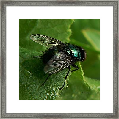 To Be The Fly On The Salad Greens Framed Print by Barbara St Jean