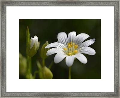 To Become  Framed Print