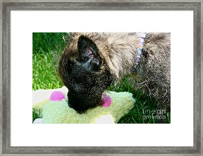 To Catch A Star Framed Print by Susan Herber