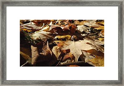 To Everything There Is A Season Framed Print